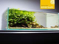 www.emersum.de // 5L Wabi-Kusa Tank aquascape