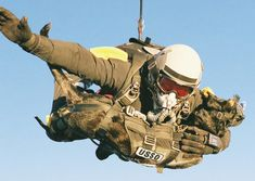 """A U.S. Navy SEAL, Mike Forsythe, and his dog, Cara -- pictured [below] -- recently broke the world record for """"highest man/dog parachute deployment"""" by jumping from 30,100 feet."""