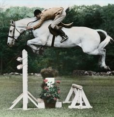 Snowman - this horse was an old plow horse on a truck to a slaughter house when he was rescued..