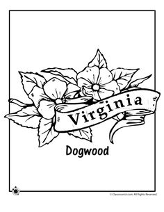 State Flower Coloring Pages Virginia Page Classroom Jr