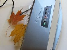 laminating a whole set of real fall leaves