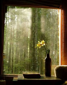 Spring light through the window, Marin County, California