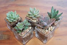 "150 2"" Succulents with 150 Beautiful square Glass Votives Complete Wedding Favor…"