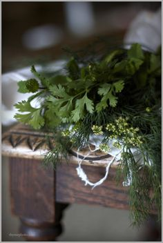 These fresh herbs, dill and parsley. Spices And Herbs, Fresh Herbs, Herb Garden Design, Herbs Garden, Garden Ideas, Purple Home, Growing Herbs, Garden Planning, Herbalism