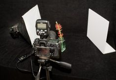 How to Set Up a Lighting Studio for Macro Flower Photography