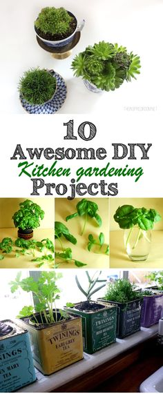 Top 10 Awesome DIY kitchen Gardening Projects