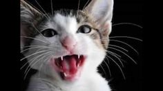 Funny Cat Video - Why Your Cat Is The Real Boss In The Relationship ?