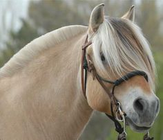 Think how pretty their manes would look if they were never cut, like the forelock!