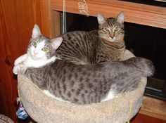 Spaying/neutering feral and stray cats is best for all (via the Salem Statesman Journal)