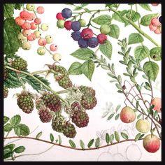 #botanicalart #watercolor #berry