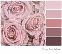 A Background Of Faded Pink Roses In A Colour Palette   123rf.com