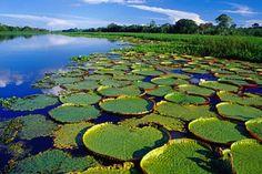 Tours Selva de Peru