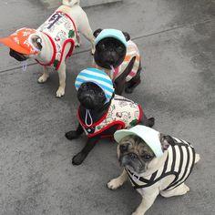 Hat gang pugs