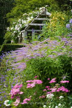 Roses and attractive herbaceous planting at Wallerton Old Hall Gardens