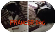 PRANCER DOG (BONUS VLOG 50)