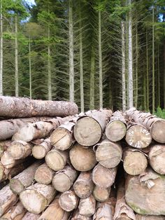 Logs and Trees. Beecraigs Country Park