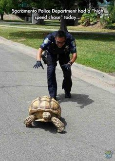 Not a high speed chase, but an important one. Turtles don't belong on roads.