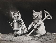İnternetten Önce de İnsanların Kedileri Fotoğraflamaya Bayıldığının 30 Nostaljik İspatı