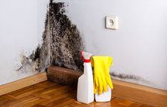 It's important to look to your environment for potential causes, including the presence of toxic black mold. To be clear, black mold. Toxic Black Mold, Remove Black Mold, Toxic Mold, How To Remove, Remove Mold Stains, Mold And Mildew, Wall Molding, Diy Molding, Cavity Wall Insulation