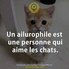Un ailurophile est une personne qui aime les chats. Albert Schweitzer, Quote Citation, Aristocats, Psychology Facts, Phobias, I Don T Know, Positive Attitude, Vignettes, Science And Nature