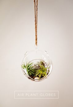 Hanging Air Plant Globe Terrarium