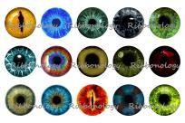 Eye Iris Bottle Cap Graphics 4 x 6 15 1 Inch Cap Circles