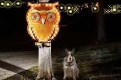Lighted Owl Marquee Sign Marquee signs Marquee by TLNFunctionalArt