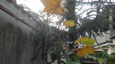Cores do Outono.