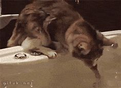these-animals-fked-up-and-they-know-it-17-gifs-18