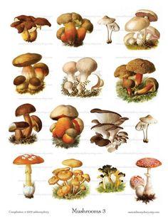 Vintage Mushroom Illustrations 3  Digital Collage by ImageArts, $3.99