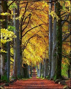 Autumn beech avenue to Drummond Castle, Scotland (by Stuart-Low). trees lead to path. wonder where that leads Beautiful World, Beautiful Places, Amazing Places, Tree Tunnel, Famous Castles, Scotland Castles, Foto Art, Pathways, Places To See