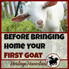 #goatvet likes this list but would add a quarantine pen and investigation of the health of the goats original herd.