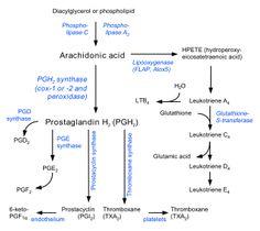 Eicosanoid synthesis - Prostacyclin - Wikipedia, the free encyclopedia
