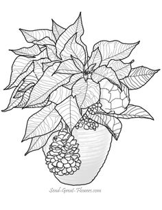 christmas-poinsettia-coloring-page-lg.jpg (612×792)