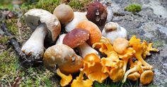 eetbare-paddenstoelen-gezond.jpg