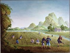 Chinese Agriculture during the Qing Dynasty Only around 4 percent of people lived in cities while the rest farmed mainly tea and rice, spun silk and cotton or made small gifts which were sold at markets. -Tahlia