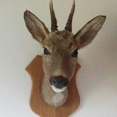 lille hjort