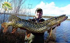 Most beautiful Pike markings I've ever seen!! #pike #pikefishing