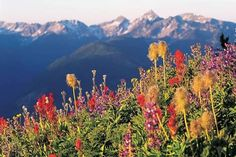 Image result for photographs of canadian rockies in wild flower season