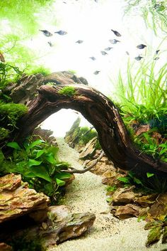 "I love ""walkways"" in fish tanks and I know we're doing sand so I'm going to buy some beautiful, flat, smooth stones for a walkway but a bridge over it would be insanely beautiful                                                                                                                                                                                 More"