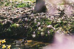 Two ducks by Elvira Zakharova on 500px