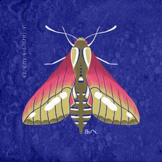 Digital Illustration. Flora And Fauna, Digital Illustration, Moth, Insects, Digital Art, Watercolor, Animals, Pen And Wash, Watercolor Painting