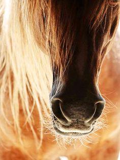 Partial horse head