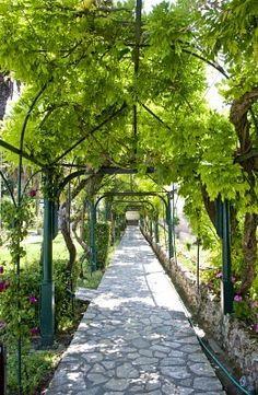 Grape Arbor in Greece
