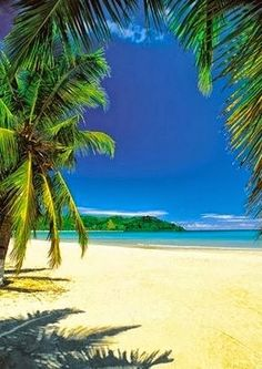 Dreaming of Madagascar...