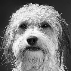 aSmithlord Photography: Dog portrait Black and White Photography