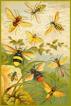 Vintage Illustration ARTEFACTS - antique images: Insects — for personal use only! Art And Illustration, Vintage Illustrations, Antique Illustration, Printable Art, Printables, Buzz Bee, Vintage Bee, Shabby Vintage, Vintage Yellow