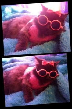 cats looking cool in glasses 23 (1)