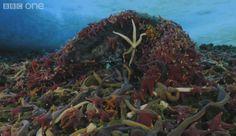 GIF ocean life images | Algunos del Océano