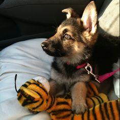 Exciting car ride - Lola